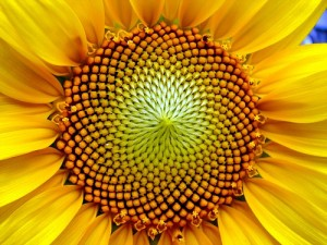 The Fibonacci Tool for Support and Resistance – To use or not to use