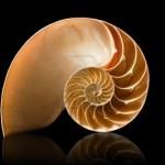 Quickfib - A Little Fibonacci Help Could Do Miracels