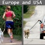 usa vs europe walking dogs