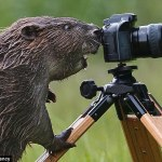 Beever take a photo