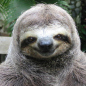 The Sloth in Action