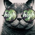 This Cat is High!