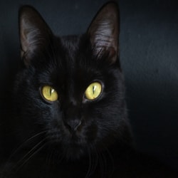 Black Cat, Warning!