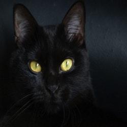 Black Cat, Warning!