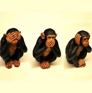 monkeys scam